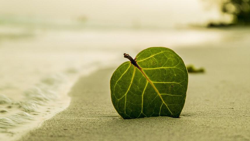 砂浜に葉っぱが刺さっている画像